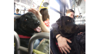 seattle-bus-riding-dog-eclipse-5e2ab379388a5__700